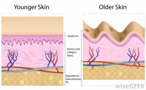 Understanding the deeper cause of skin aging